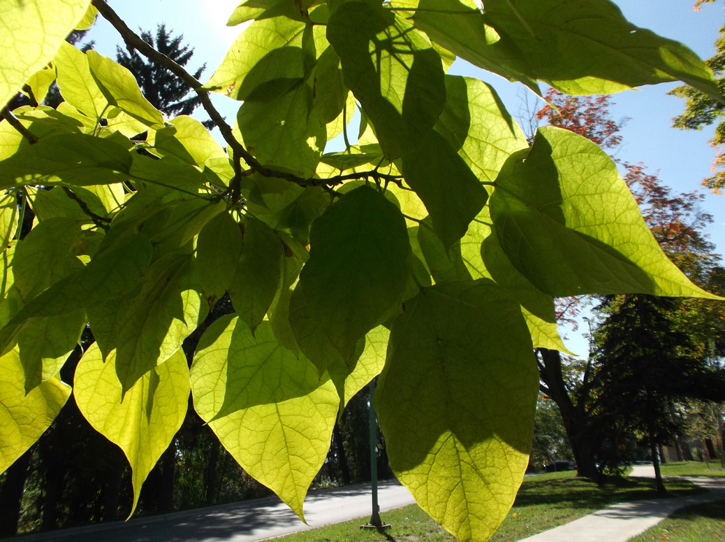 Take the Fall Color Tour in Traverse City\'s 128 year-old Arboretum ...