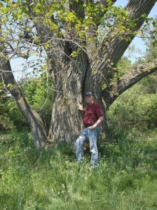 Author at base of blight-free American Chestnut on Old Mission, 28 May 2015.