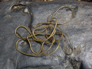 A single horsehair worm displays its characteristic tangle. Image courtesy of Sara Viernum, https://flic.kr/p/dj6A4M.