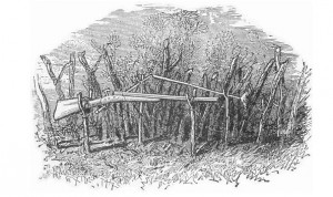 "An example of a gun trap, illustration pulled from ""Camp Life in the Woods,"" by Gibson, published 1881."