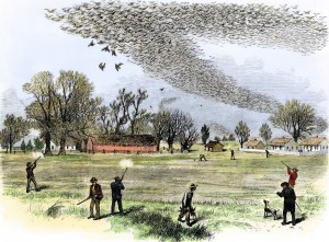 "Smith Bennett, Passenger Pigeon flock being hunted, from ""The Illustrated Shooting and Dramatic News"", 3 July 1875."